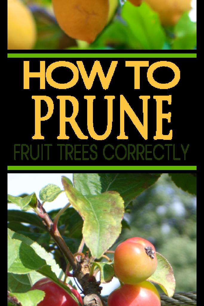 Howtogardenit Com Prune Fruit Fruit Garden Fruit Trees