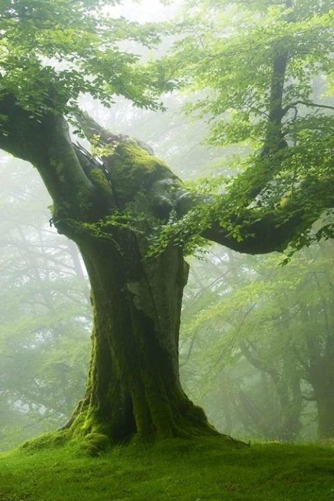 Druids Trees:  Sometimes, you have to be silent... .