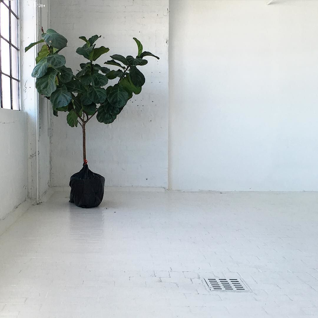 Moving into the new studio today! This place still totally blows my mind. Can't wait to get creative here with @ispydiy and @_laurinteriors !  #dslooking #abmhappylife #darlingweekend #thatsdarling #allwhiteeverything #plantsofinstagram #madeinmilwaukee by loftstudiosdesign