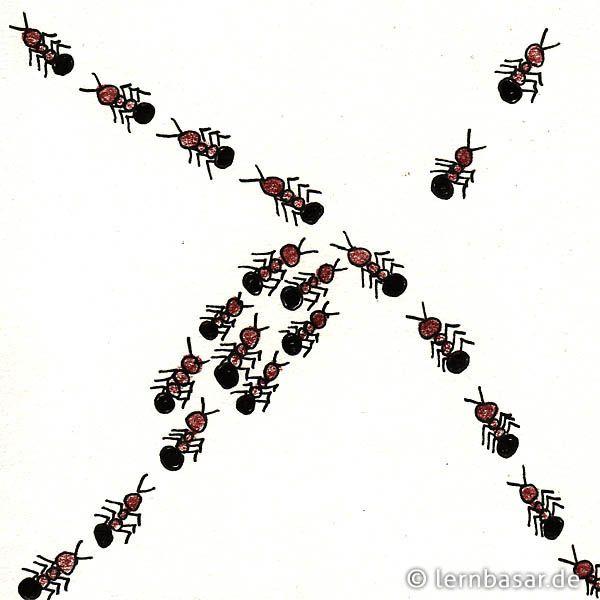 Unique Szenen aus dem Leben der Ameisen Inchie