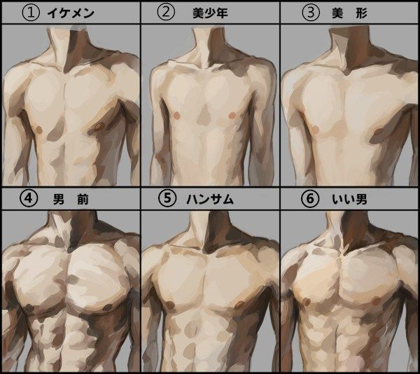 Most Attractive Male Body Type Anatomy Reference Body