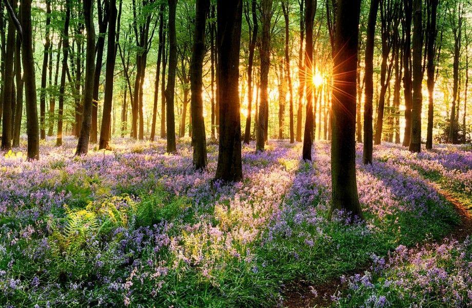 Spring Grass On Sunset 4k Ultra Hd Wallpaper 4k Wallpaper Net Photo Magnifique Musique Relaxante Meditation