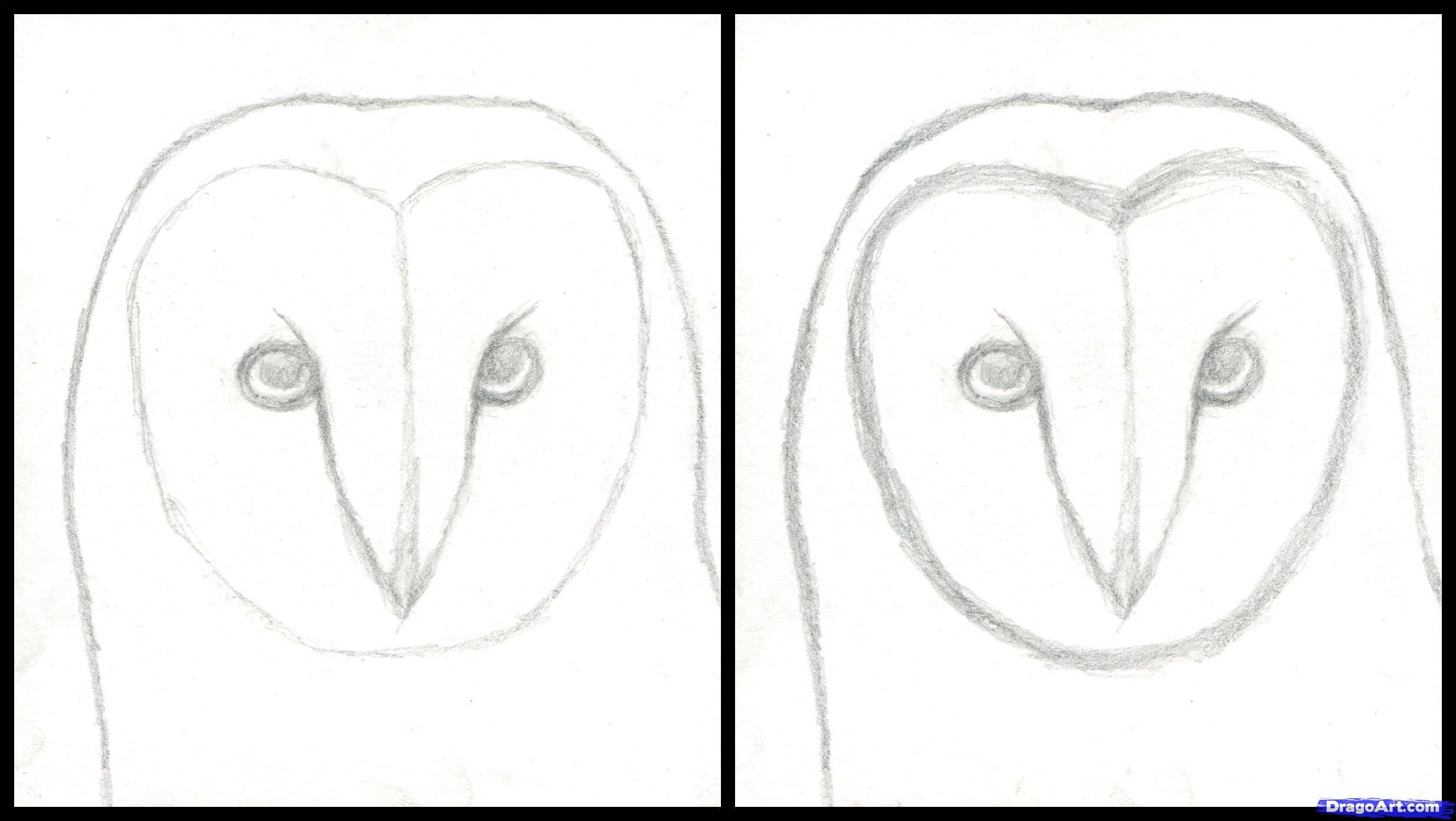 How To Draw An Owl Head Masked Owl Step By Step Birds Animals Owls Drawing Owl Head Horse Head Drawing