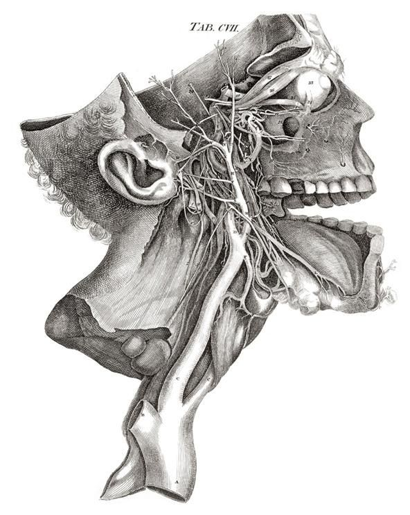 Image result for human anatomy illustrations | The Emperor ...