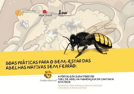 Boas práticas para o bem-estar das abelhas sem ferrão