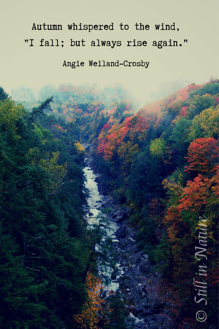 Nature Quote Print Download Angie Weiland Crosby Quote Etsy In 2020 Nature Photography Quotes Nature Quotes Quotes About Photography