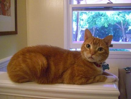 Help Tigger Please He Needs A Loving Forever Home Isn T He Just The Cutest Please Share Adoptablecat Adoptablepet Cat Adoption Cats Dog Adoption