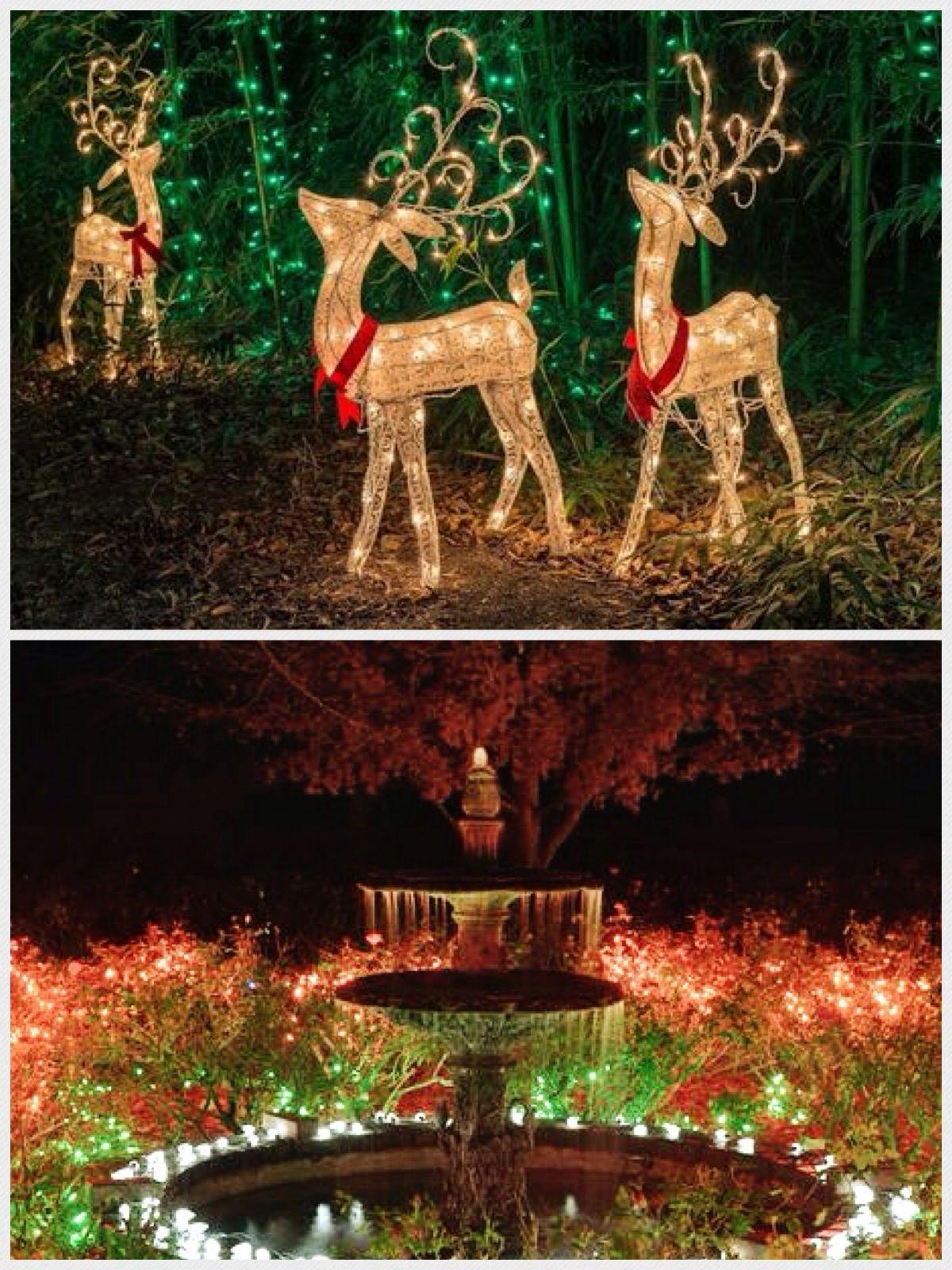 December Nights & Holiday Lights @ Coastal Georgia Botanical Gardens ...