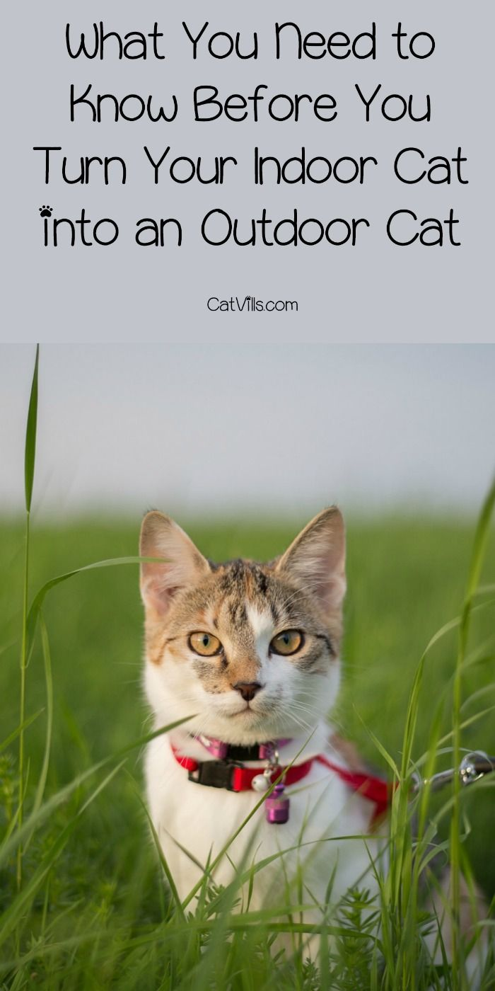 What You Need To Know Before You Turn Your Indoor Cat Into An Outdoor Cat Cat Training Indoor Cat Cats