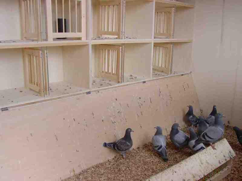 Inside Pigeon Nest. Pigeon Nest; Pigeon need a comfortable ...