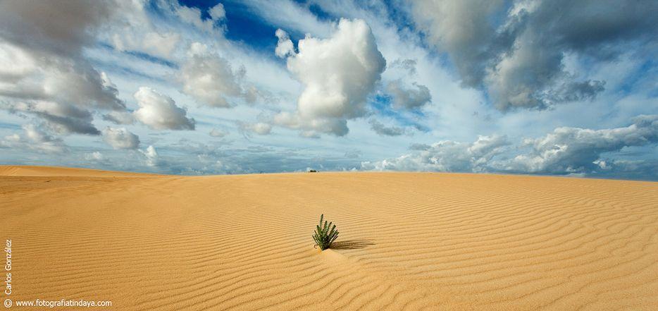 Las dunas están al norte de la isla de Fuerteventura el parque natural de las dunas cuenta con más de 2600 hectáreas de un maravilloso paisaje un tanto diferente a lo habitual, con un agua azul turquesa