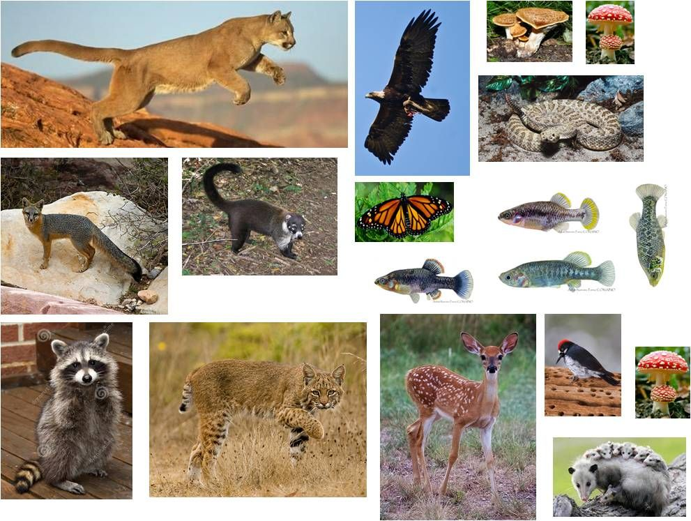 Ecosistema bosque de coniferas o bosque templado animales for Nombres de arboles en ingles