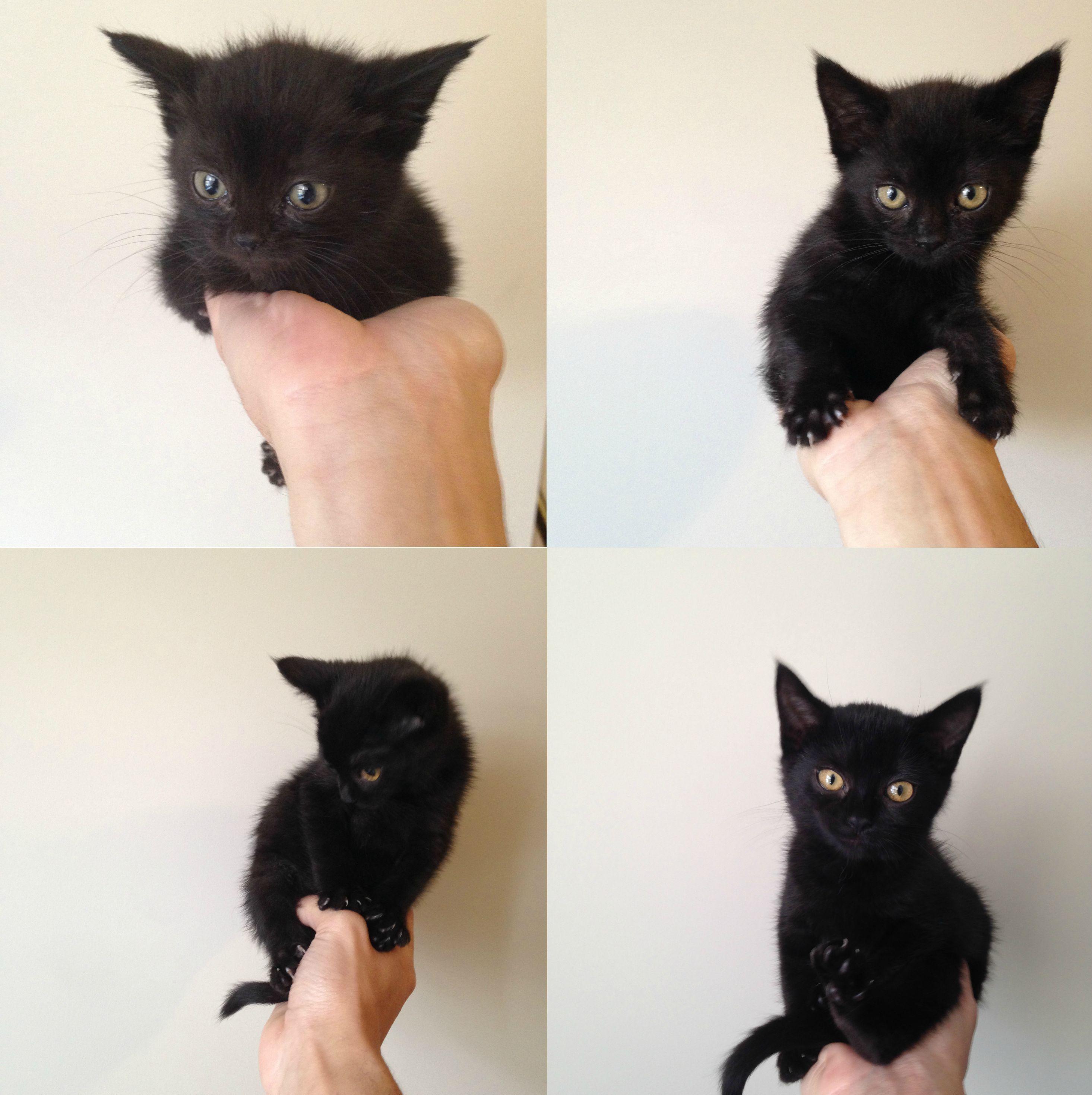 8 Weeks Of Foster Kitten Growth Before She Goes Off To Her New Home Katten En Kittens Dieren Poesjes