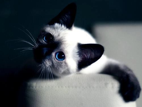"""""""He lives in the half lights, in far away places, free and alone--this little-great being whom his mistress calls, 'My Cat.'"""" --Margaret Benson"""