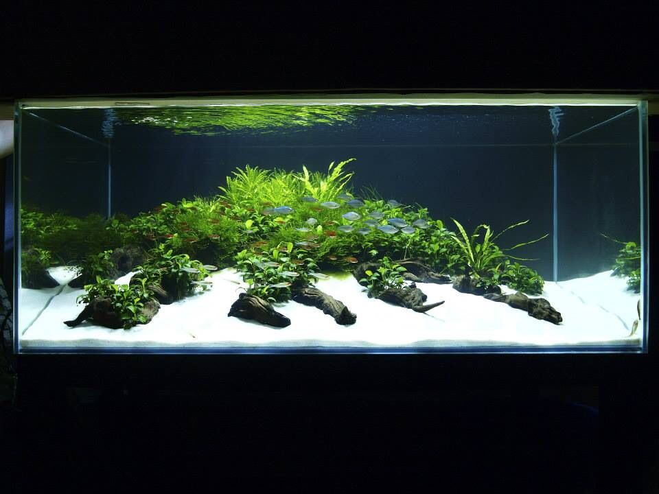 Aquascaping! white sand …