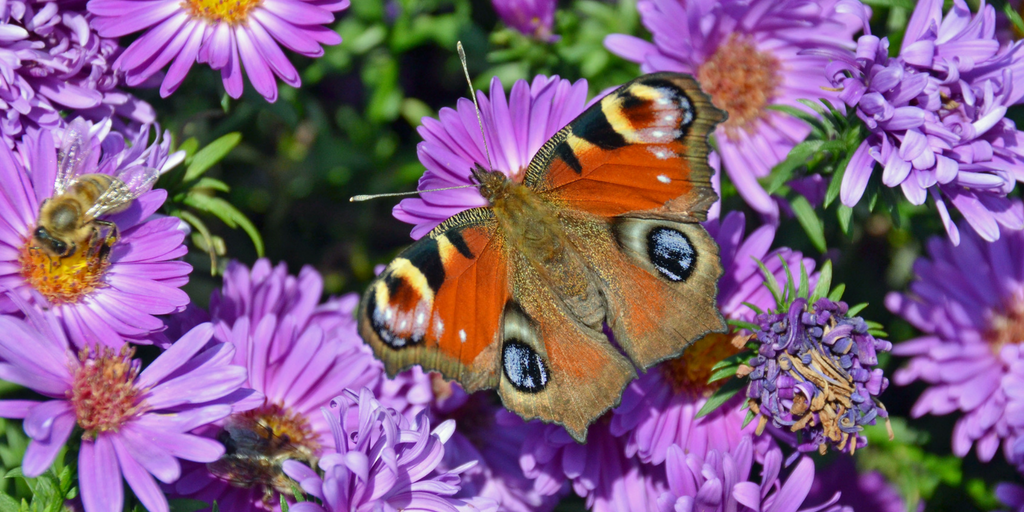 How To Attract Butterflies to Your Garden Naturally https ...