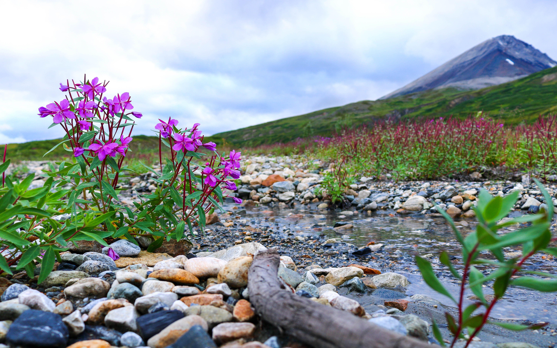 Landscape Beauties Of Nature Stream Gravel Gravel Bougainvillea
