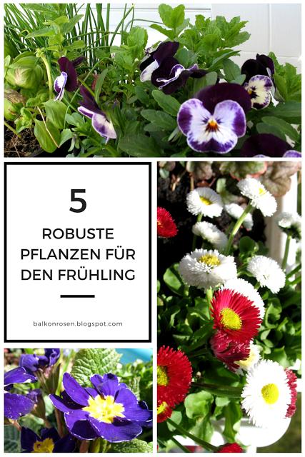 Balkonpflanzen märz  5 Winterharte und Frostfeste Balkonpflanzen für den Frühling ...