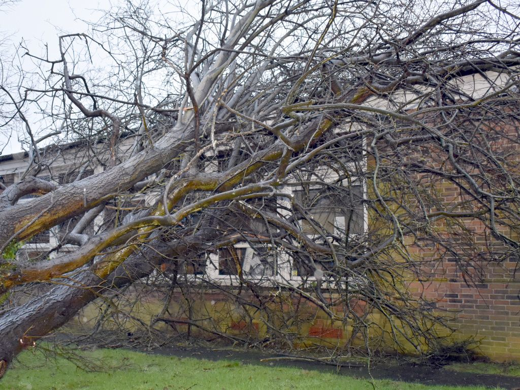 Why you should avoid diy tree surgery in 2020 with images