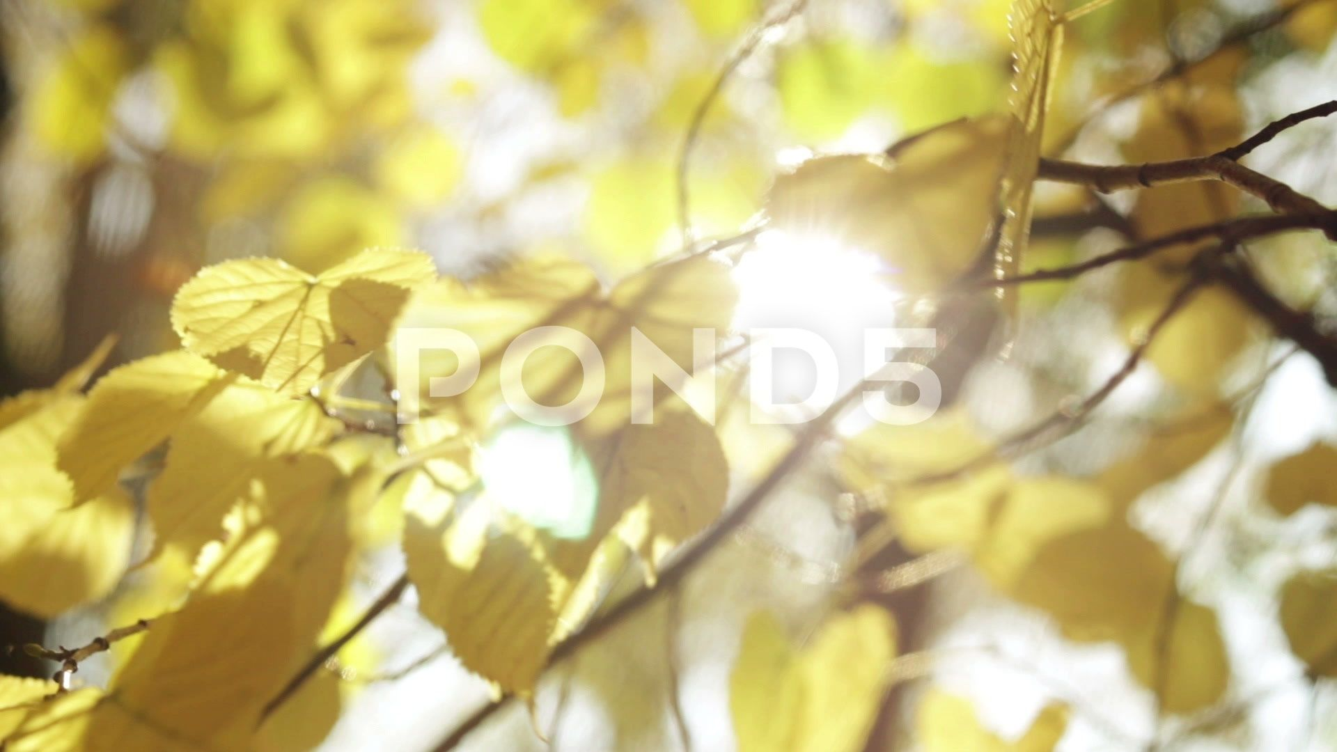 Nature Background With Sun Light Throw Yellow Foliage Leaves Autumn Park Stock Footage Ad Light Throw Yello Nature Backgrounds Autumn Park Plant Photography