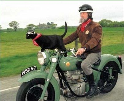 Cats Riding Motorcycles   Biker dog, Crazy cats, Funny animals