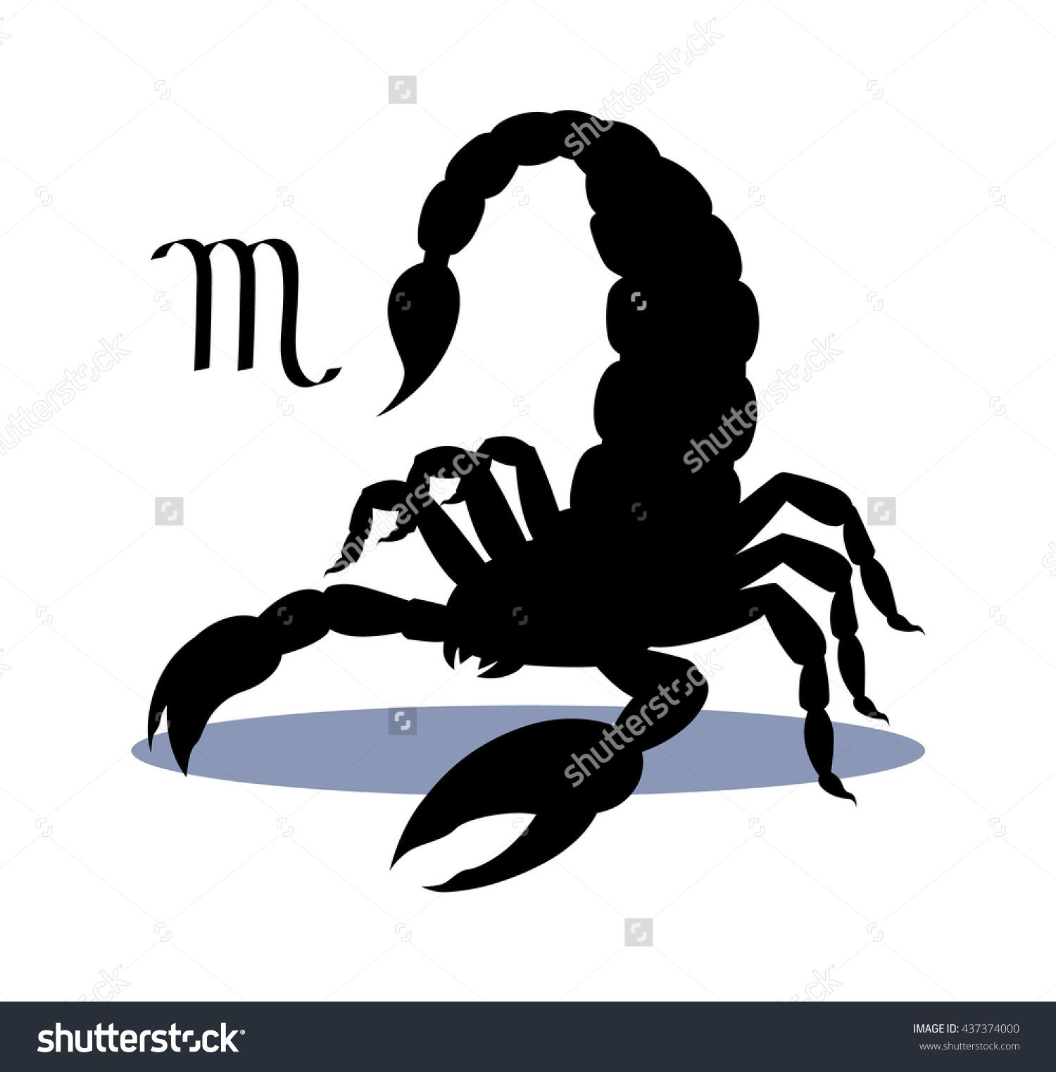 5015b524cf504 Silhouette of dangerous insect scorpion isolated on white background,  detailed spider, astrological icon Scorpio. The symbol of the month of  November on the ...