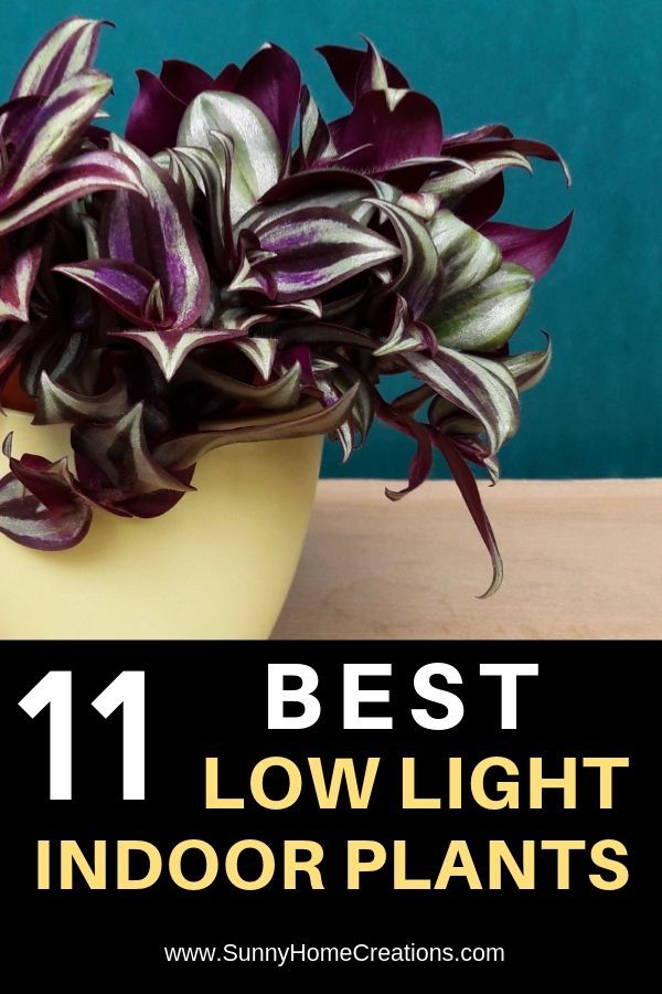 11 Best Low Light Indoor Plants
