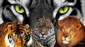 Resultado de imagen para felinos salvajes collage