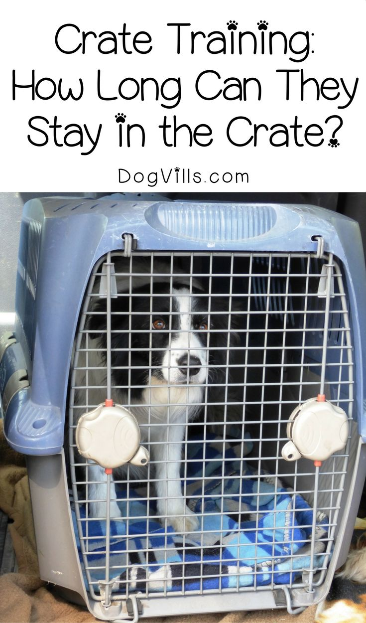 How Long Can You Leave A Dog In A Crate During The Day Dog