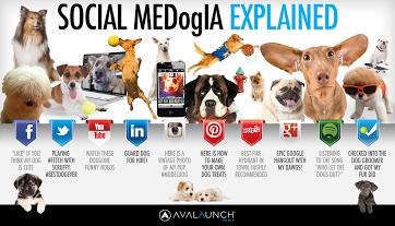 Diverso Social diversa comunicazione e diverso cane... #Socialmedia #Socialmediamarketing #webmarketing