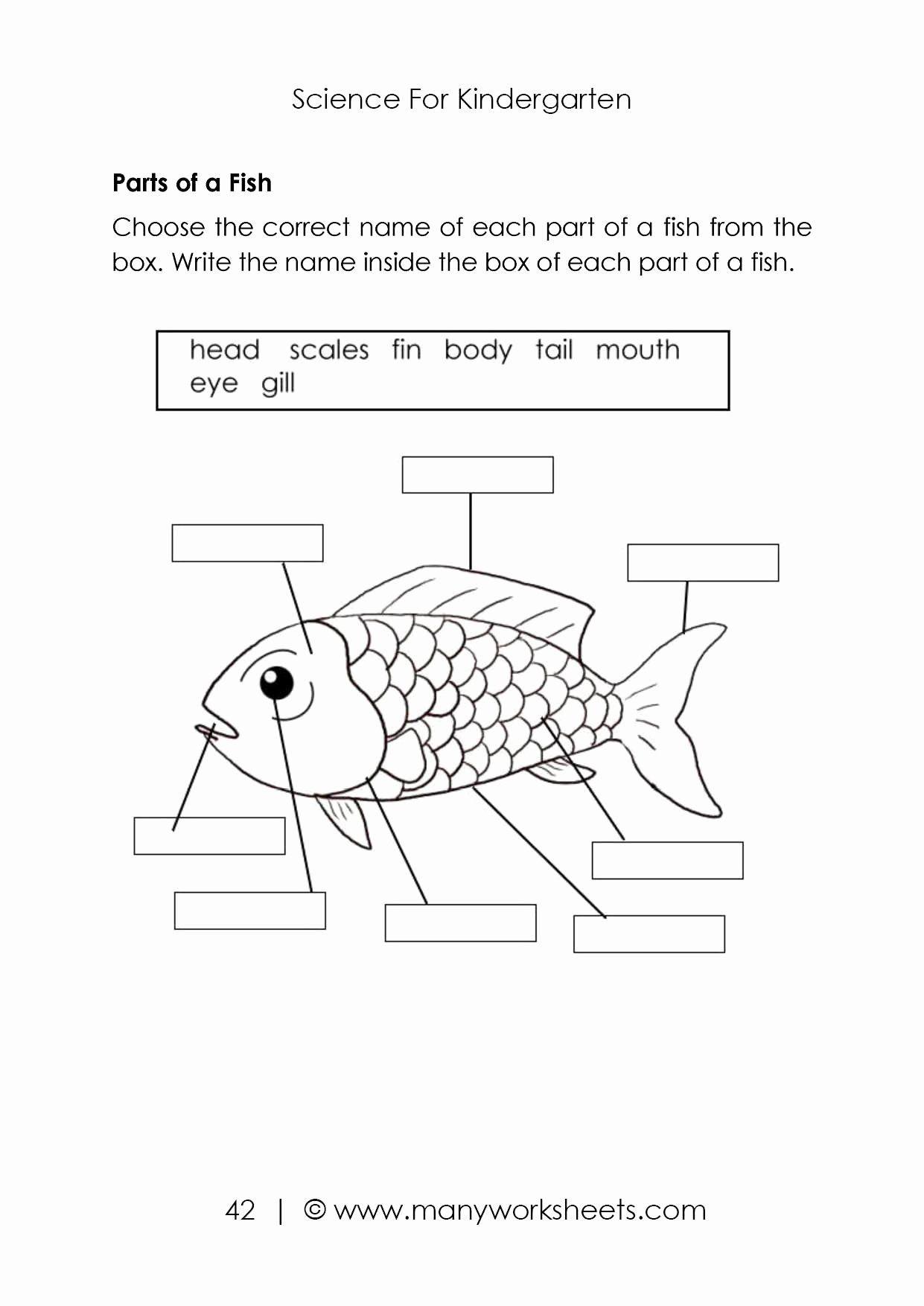 Coloring Vegetables Worksheets Pdf Inspirational Science Worksheets For Kids Parts Of Animals Body In 2020 Animal Worksheets Worksheets For Kids Kindergarten Science