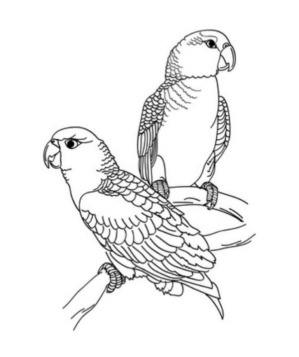 adult coloring pages | Beautiful Parrot Coloring Pages for Kids ...