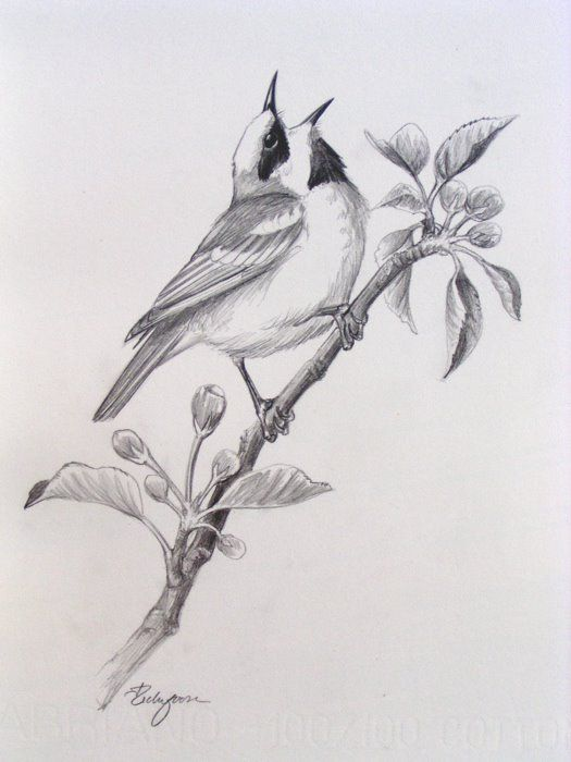Bird pencil drawings google zoeken