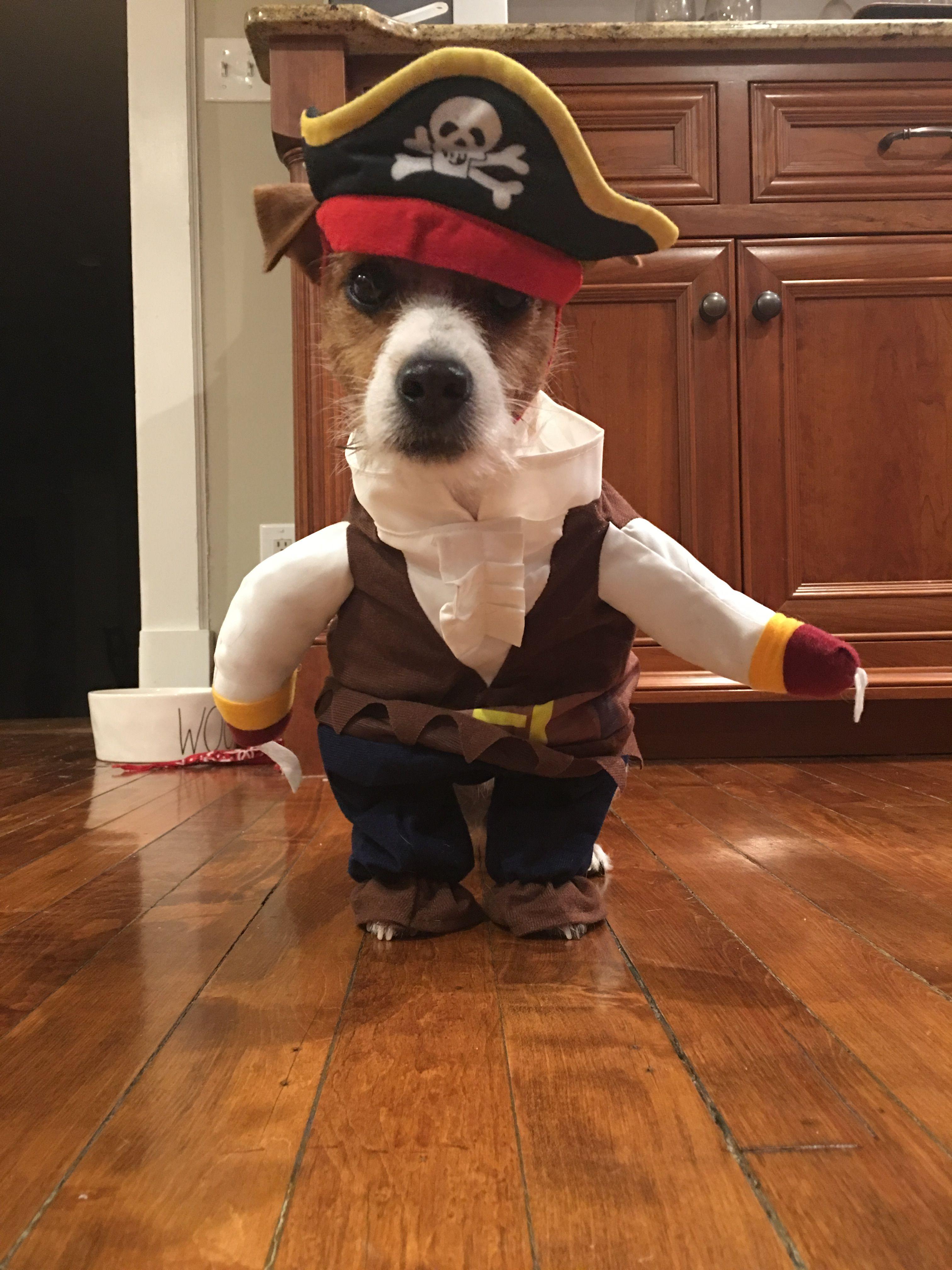 Jack russell Zoe the jack Dog Halloween costume Dog