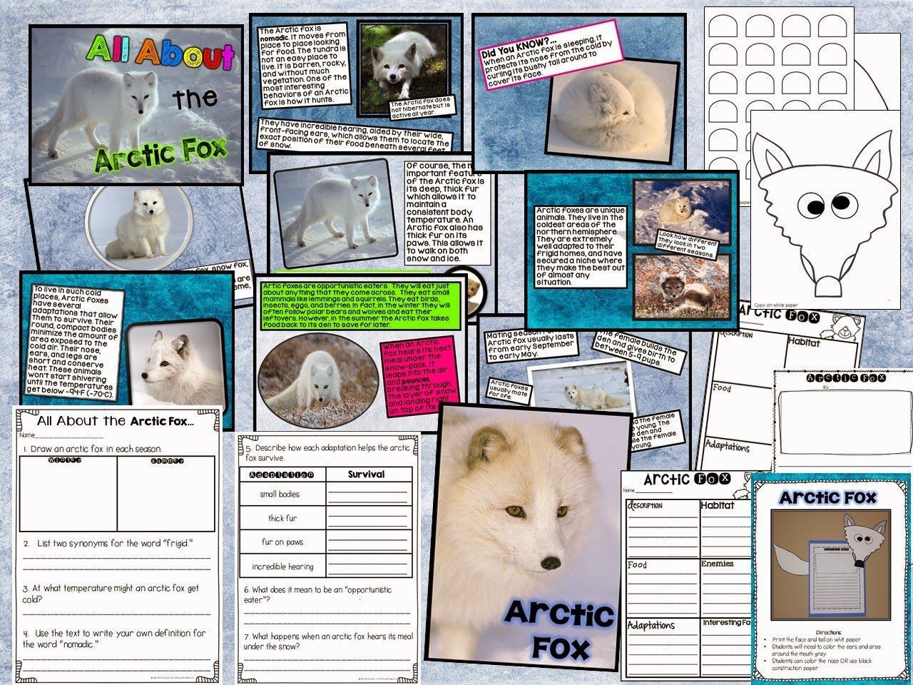 Arctic Animals Extravaganza