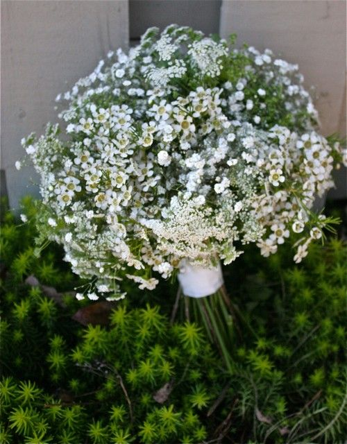 How sweet...wax flower, Queen Anne\'s Lace and baby\'s breath. Simple ...