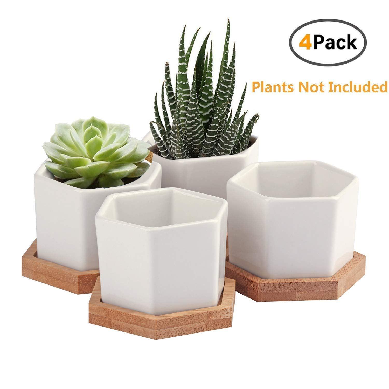 Succulent Planter Oamceg 2 75 Inch Succulent Plant Pots Set Of 4 White Ceramic Succulent Ceramic Succulent Mini Succulent Plants Plants