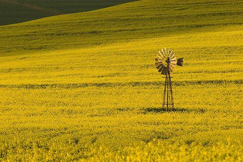 Yellow land's windmill