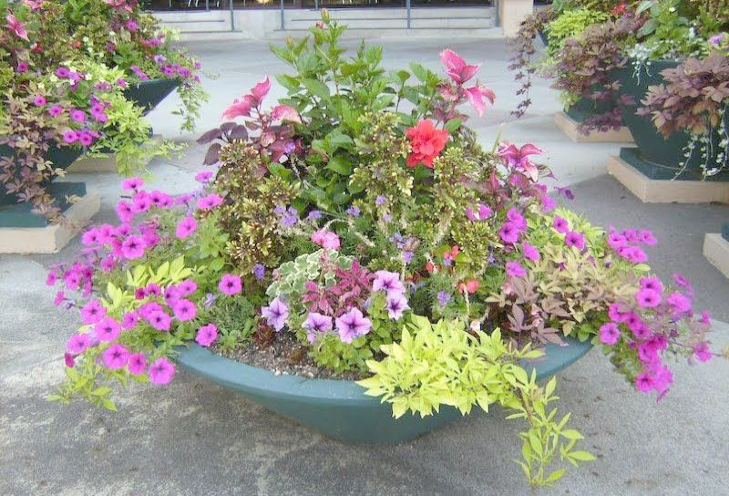 Container Gardening Planting Guidelines with Landscape ...