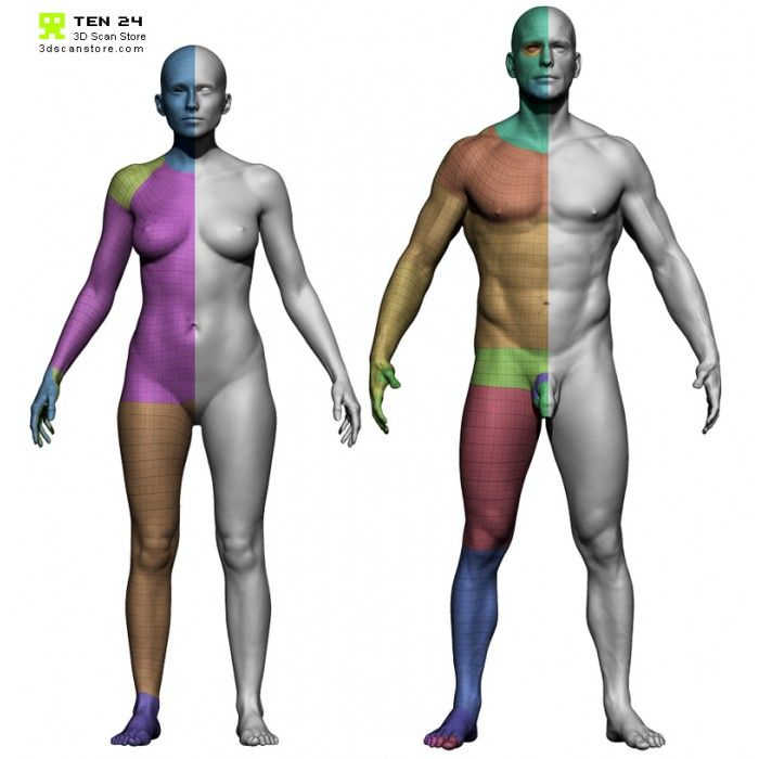 3d Scan Store Male And Female Base Mesh Bundle Cgpeers Beta 2 Build 723423 32bit