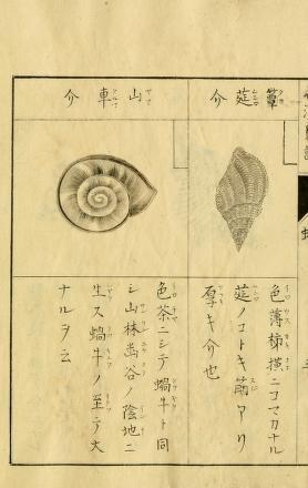 v 1 (1914) - Wakan kaifu. - Biodiversity Heritage Library