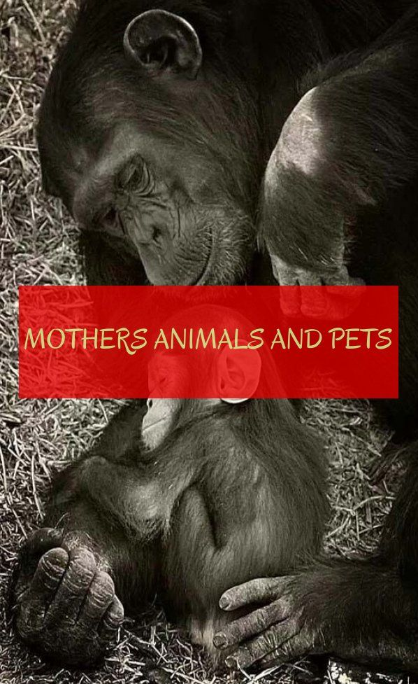 Mères Animaux Et Animaux Mothers Animals And Pets