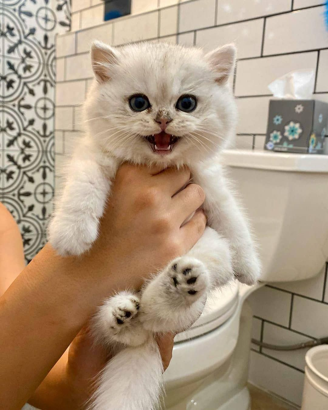 My Dreamy Cats On Instagram Follow Us Mydreamycats If You Are A Real Cat Lover We Publish Cute Cats Photo And Amazing V In 2020 Cute Cats Photos Cute Cats Cat Love