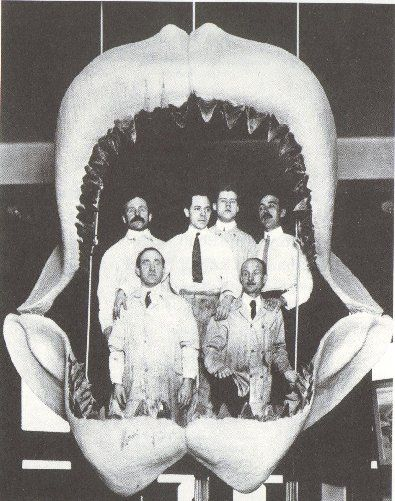 The megalodon, Carcharodon megalodon, (from ancient Greek