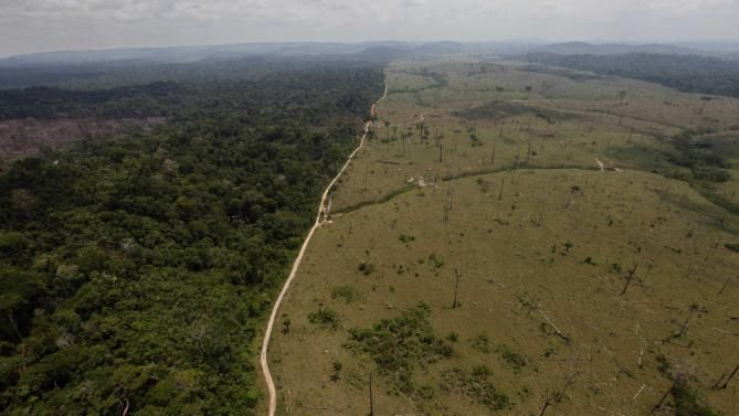 Satellite Data Suggests Forest Loss Is Accelerating Brazil