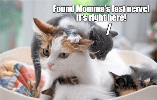 Cat Memes 2019 60 Cat Memes To Inspire You To Take A Photo Of Your