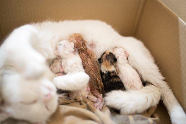 tobb8/iStock/Getty Images Newborn kittens, Kitten care