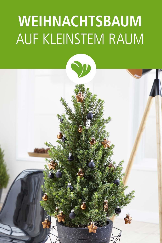 Echter Weihnachtsbaum