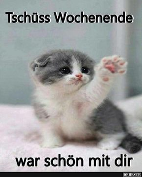 Besten Bilder, Videos und Sprüche und es kommen täglich neue lustige Facebook Bilder auf DEBESTE.DE. Hier werden täglich Witze und Sprüche gepostet! #fluffykittens