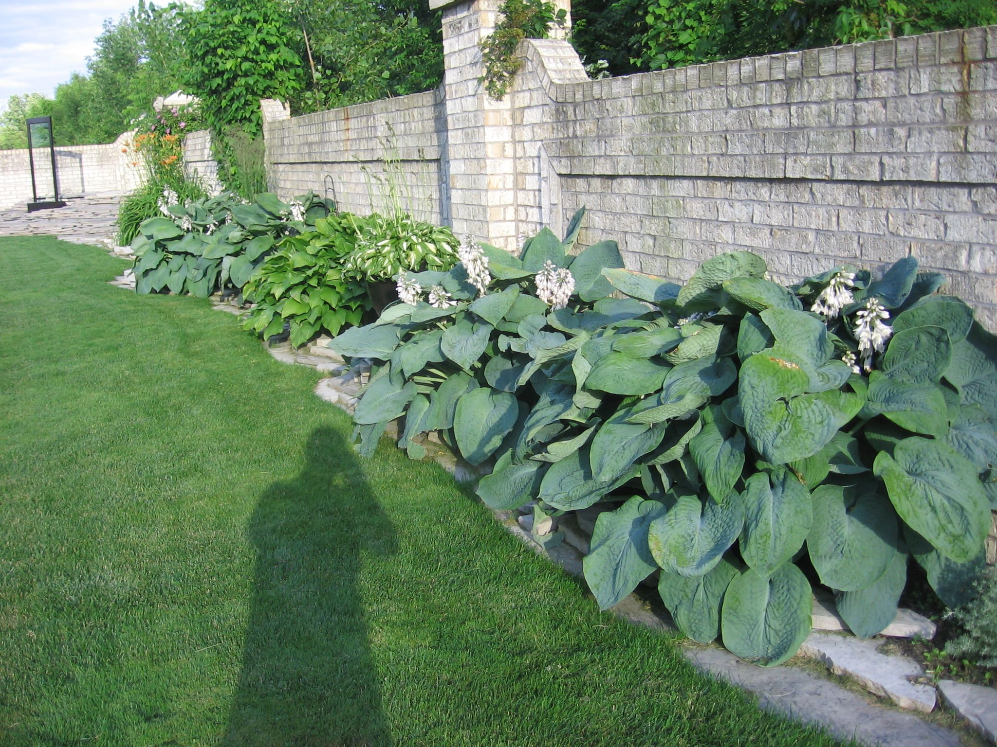 Elephant Ear Hostas Shade Garden Hostas Outdoor Decor